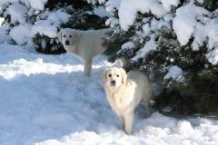 14.02.09 Kimmy & Maya IMG_4949